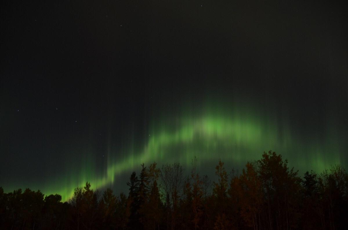 Green aurora borealis shimmering over pine trees.