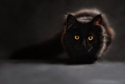 Crouching fluffy black cat with glowing yellow eyes.