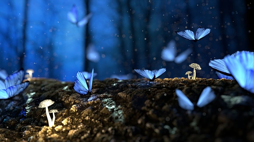 Tiny butterflies on a forest floor with minute mushrooms, and blue twilight sky in the background.
