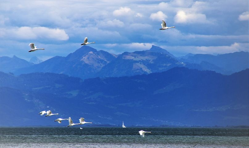 Image: geese flying over a mountain-lake scene.